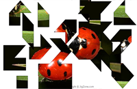 Ladybugs Puzzle