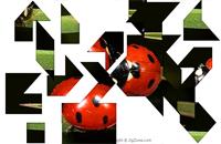 Ladybugs Puzzle